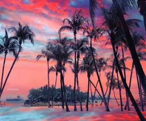 blue, colorful, and palm trees image