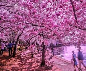 amazing, nature, and beautiful image