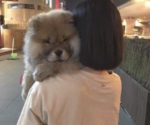 dog, animal, and ulzzang image