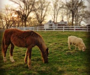 country life, farm, and farmhouse image