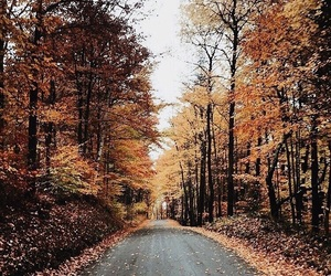 fall, autumn, and forest image
