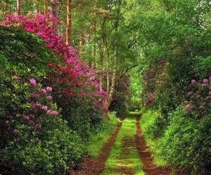 flowers, path, and trees image