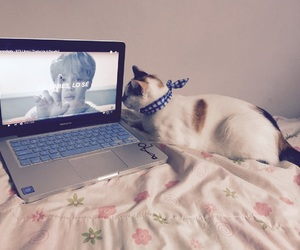 cat, macbook, and serendipity image