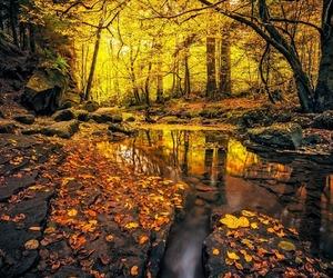 orange, reflection, and yellow image