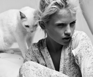 cat, model, and black and white image
