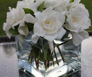 gardenias image