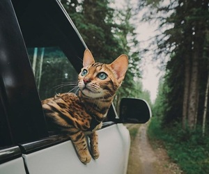 cat, forest, and photography image