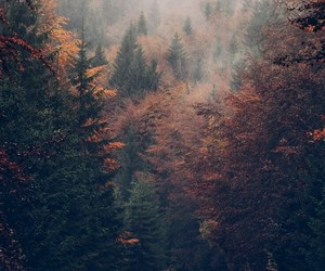 autumn, forest, and fall image