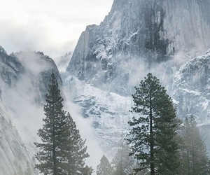 fog, trees, and mountains image