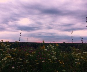 clouds, evening, and flowers image