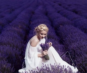 lavender, flowers, and purple image