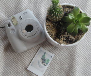 cactus, green, and grey image