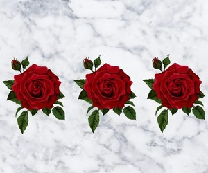 aesthetic, marble, and roses image