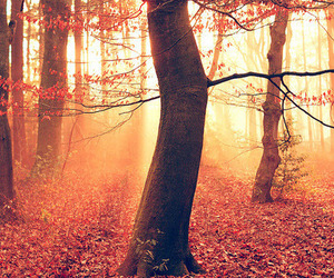 tree, autumn, and beautiful image