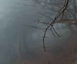 rain, autumn, and tree image