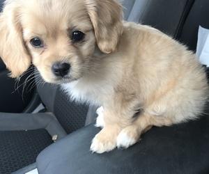 bella, cute dog, and dog image