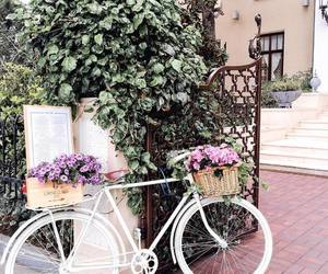 beautiful, bicycle, and flowers image