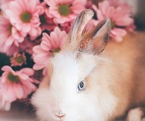 animal, art, and background image