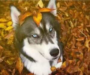 animals, cute, and dogs image