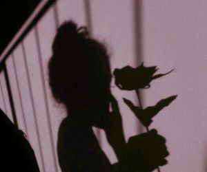 rose, pink, and shadow image