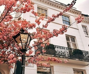 building, architecture, and flowers image