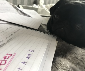 attention, notes, and cute pug image