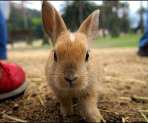 baby, cute, and rabbit island image