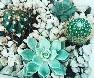 cactus, herbs, and potted plant image