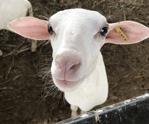 animals, farm, and fun image