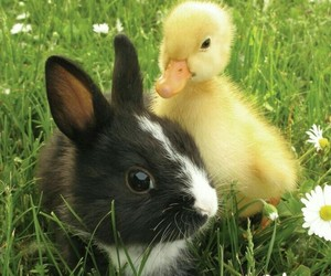 bunny, animal, and duck image