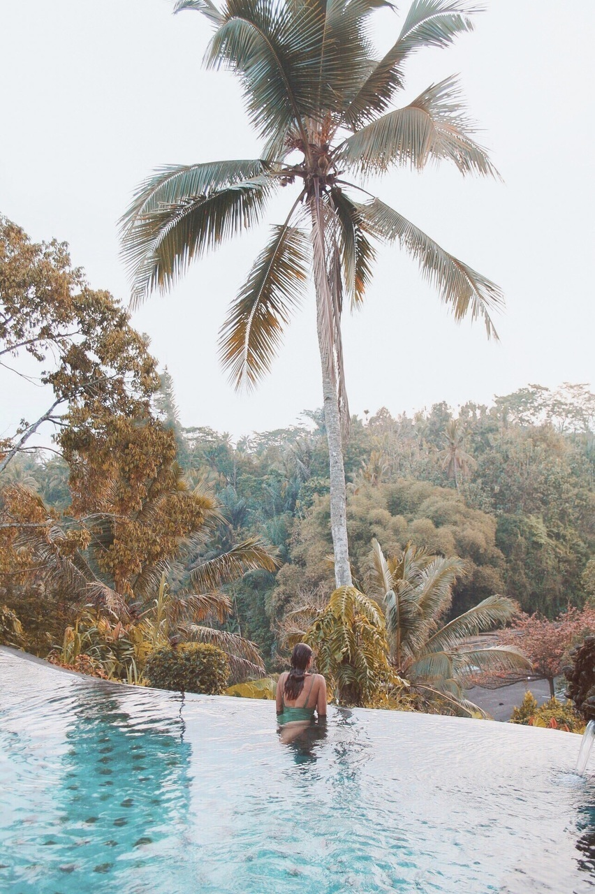 bali, bikini, and palmtree image