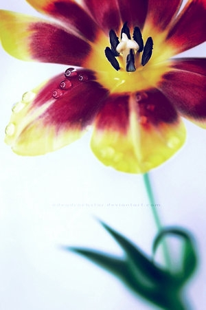 close, drops, and flower image