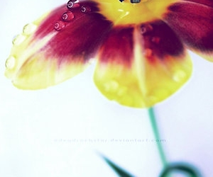 close, flower, and drops image