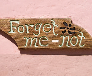 forget-me-not, signage, and signs image