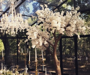 blossom, chandelier, and decor image