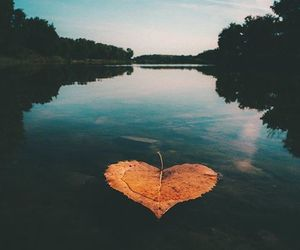love, article, and autumn image