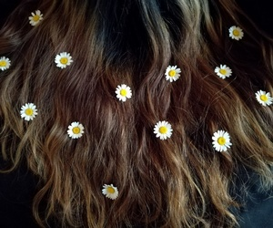 daisies, flowers, and hair image