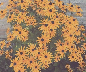 bright, daisy, and grunge image