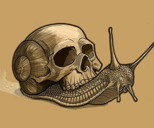 animal, skull, and insect image