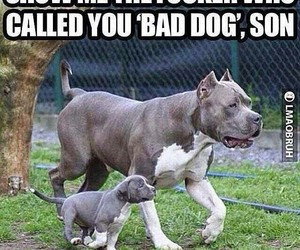 funny, dog, and son image