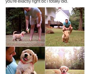 adorable, awww, and dogs image
