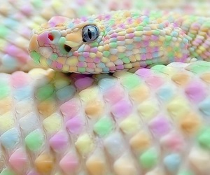 colorful and snake image