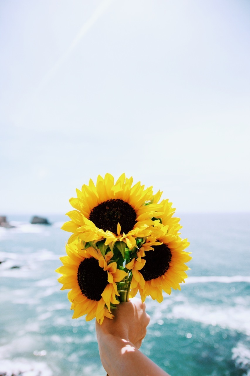 sunflower, flowers, and sea image