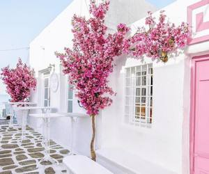 pink, white, and flowers image
