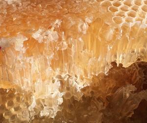 honey, theme, and bee image