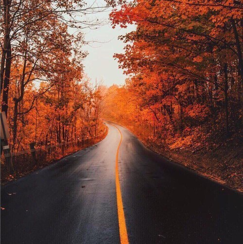 autumn, beautiful, and red image