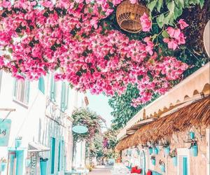 travel, flowers, and blue image