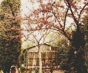 vintage, photography, and tree image