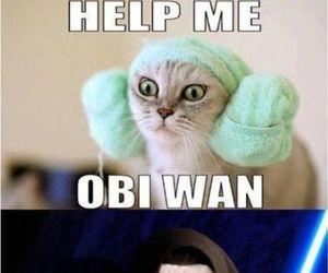 cat, funny, and obi wan image