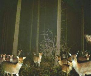 deer, forest, and night image